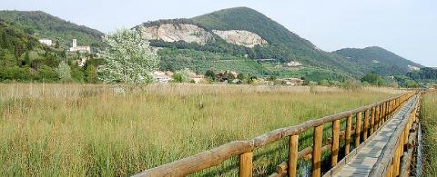 Foto zona verde Parco di San Rossore - Hotel Sirio 3 stelle a Lido di Camaiore in Versilia, Toscana